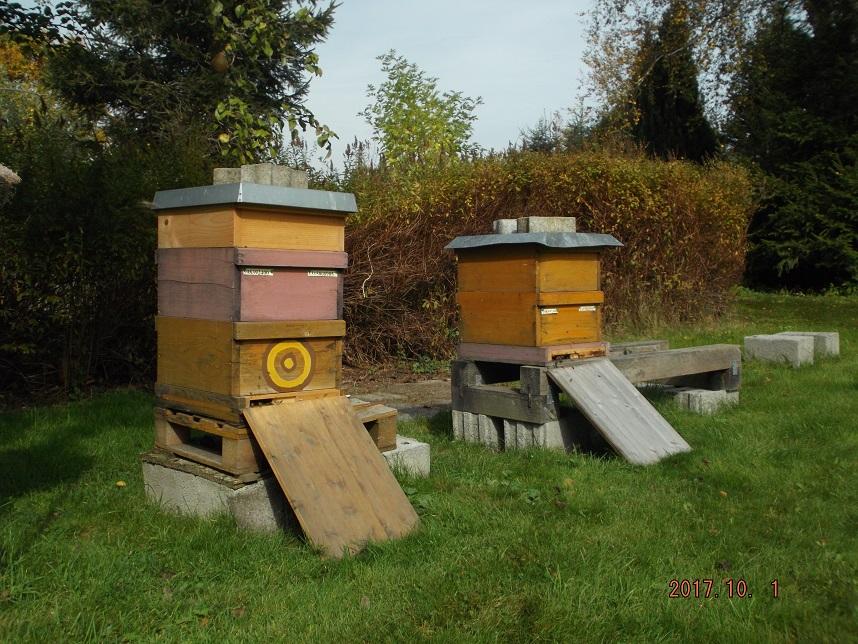 Angela Bayers Bienenstöcke