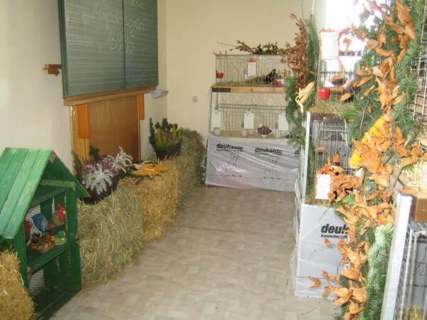 Kleintierzuchtverein - Ausstellungsversammlung