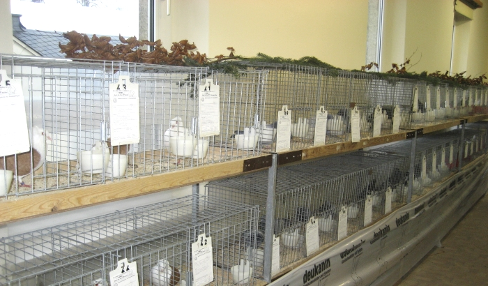 Kleintierzuchtverein - Monatsversammlung